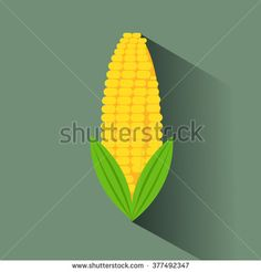 Corn vector illustration.