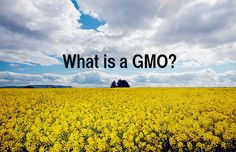 For your friends that still think that genetically engineered food is as natural as breathing, send them this video, What is a GMO?, (an excerpt from Genetic Ro