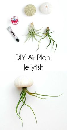 Use air plants and s...