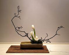 Alder Branches & Tulips- Slanting Moribana (B Lennart Persson- photo & maybe arranger) Ikebana Arrangements, Ikebana Flower Arrangement, Flower Arrangements Simple, Contemporary Flower Arrangements, Arte Floral, Deco Floral, Japanese Flowers, Japanese Art, Exotic Flowers