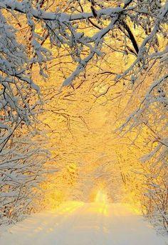 Winter in the woods by Anita Kryszkiewicz. The sunshine in winter that will warm people! Winter Szenen, Winter Light, Snow Light, Winter Sunset, Dark Winter, Winter Colors, Snow Scenes, Winter Beauty, Belle Photo