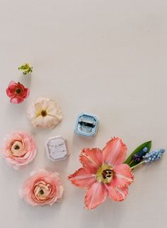 Gather Design Company blooms for a Calistoga Solage Wedding Ring Bearer, Bridal Style, Bridal Gowns, Valentines Day, Bloom, Wedding Rings, Stud Earrings, Pink, Inspiration