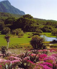 Pretty colours of Kirstenbosch Gardens Gardens Of The World, Most Beautiful Cities, Best Cities, Holiday Destinations, Cape Town, Botanical Gardens, Aloe, Adventure Travel, Places To See