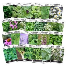 Amazon.com : Sow Right Seeds  Herb Garden Seed Collection  Arugula Basil Chi
