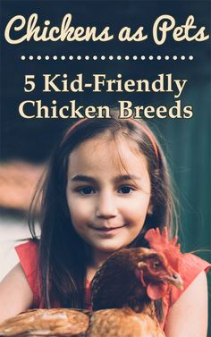 Chickens as Pets: 5 Kid-Friendly Chicken Breeds - Backyard Poultry Types Of Chickens, Keeping Chickens, Raising Chickens, Backyard Poultry, Backyard Farming, Chickens Backyard, Small Chicken Coops, Raising Farm Animals, Chicken Life