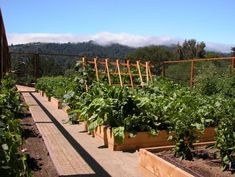 Extend your raised garden beds and save space with leaning trellises that allow your vining veggies to grow up and over rather than down and out. This essentially keeps your walking paths open and doesn't waste space within the beds themselves so you have more room for other goodies.