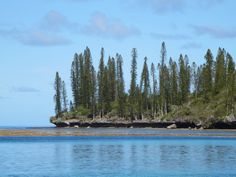 """The Isle of Pines in southern New Caledonia, South Pacific gets its name from its distinctive """"candelabra"""" pine (Araucaria columnaris), such as these growing on Ile Bayonnaise at the entrance to the Baie de Kuto. South Pacific, Candelabra, Pine, Entrance, Southern, Mountains, Water, Travel, Outdoor"""