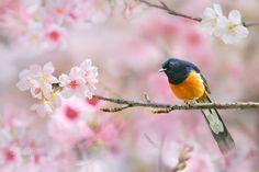Spring Singer by Sue Hsu on 500px