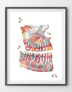 Jaw Anatomy Art Print Dental Art Watercolor Poster Dentist Clinic Decor Surgery Art Maxillary and Mandibular Print Teeth Roots and Nerves