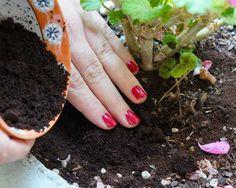 Le marc de café contient des nutriments dont on besoin les plantes qui aiment l'acidité, comme les roses, les hortensias, les framboisiers, les fraisiers et les tomates. Mettez-en directement dans le sol ou dans l'arrosoir.  Source : Comment-Economiser.fr   http://www.comment-economiser.fr/utilisations-marc-de-cafe.html http://www.comment-economiser.fr/utilisations-marc-de-cafe.html