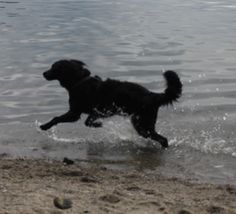 Happy to be in the water #my_favourite_dog <3