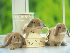 """Search Results for """"little bunny rabbit wallpaper"""" – Adorable Wallpapers So Cute Baby, Cute Babies, Lil Baby, Cute Animal Videos, Cute Animal Pictures, Funny Animal, Funny Cats, Baby Bunnies, Cute Bunny"""