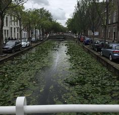 The Netherlands is so beautiful!