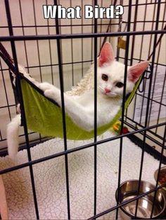 Cute animals captions (03:33:28 PM, Wednesday 13, April 2016 PDT) – 40 pics
