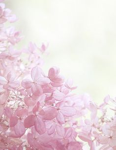 Petals of praise. Pink Love, Pretty In Pink, Photo D Art, Ethereal Beauty, Everything Pink, Happy Colors, Color Rosa, Flower Wallpaper, Wild Flowers