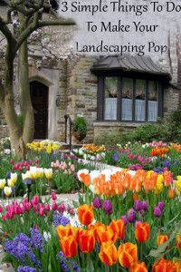 3 things to do to make your landscaping pop