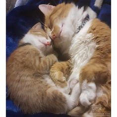 """Cats of Instagram From @ehamiltonrobinson87: """"Garfield and his son Rufus Dreaming of shinny strings and catnip things"""""""