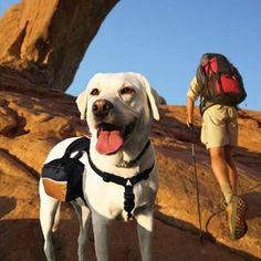 Hiking with your dog?? Get him a WanderPack Dog Pack.