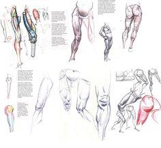 Leg #anatomy