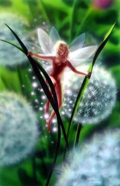Nature's Fairy Nymphs ,magical elves, sprites, pixies and winged woodland faeries Fairy Dust, Fairy Land, Fairy Tales, 3d Fantasy, Fantasy World, Wallpaper Animes, Elves And Fairies, Real Fairies, Fairy Pictures