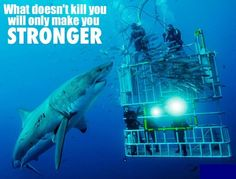 What doesn't kill you makes you stronger-wildvannatuur #shark  http://www.WILDvanNATUUR.nl