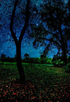 Starry Starry Night...I remember my awe over the starry sky when I was a child.....Have we lost the wonder ???