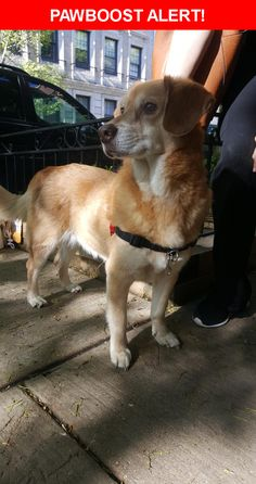 Is this your lost pet? Found in Chicago, IL 60657. Please spread the word so we can find the owner!    Nearest Address: Near W Barry Ave & N Sheridan Rd