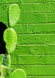 green cactus against a green wall