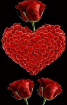 Flowers Gif, Beautiful Rose Flowers, Beautiful Gif, Love Rose, Love Flowers, Love Heart Gif, Love You Gif, Love You Images, Heart Wallpaper