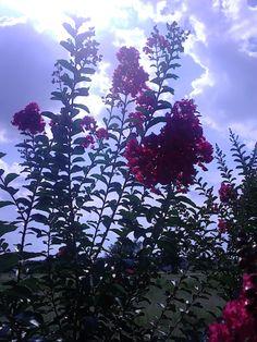 A flower by any name may be a flower to some, but its beauty no matter what kind of flower it is should always be admire for the life it lives rather not for how it looks.  Food for thought. ----------------------------------------------- Una flor por cuaquier nombre puede ser una flor para algunos, pero su belleza no importa que tipo de flor que siempre se debe ser admirado por la vida que preferiria no vive de lo que parece.  Alimento para el pensamiento.