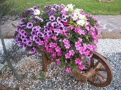 I want to make one of these, different flowers for the different seasons, maybe fill it with pumpkins and squash in the fall.