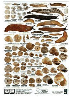 Zoekkaart Slakken Animals For Kids, Cute Animals, Snail Farming, Pet Snails, Snail Art, Natural Structures, Fauna, Science For Kids, Bird Feathers