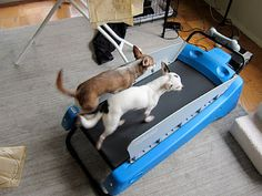 For those dogs who have too much energy...who need to take a run before coming into daycare