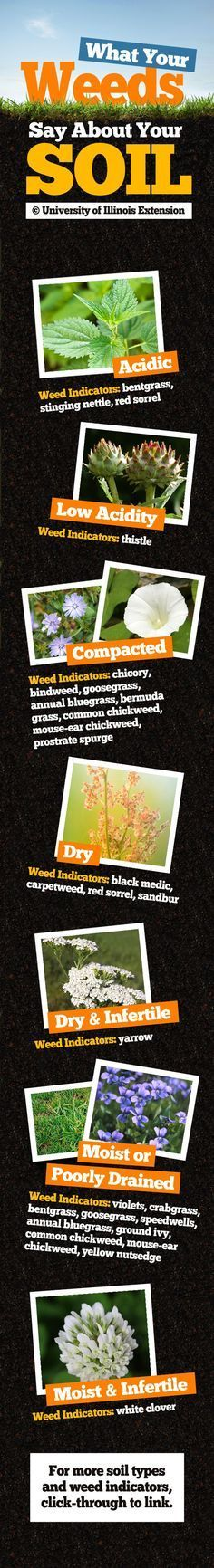 Wanna Know Your Soil's Current Condition? Use Your Weeds as Indicators: http://homeandgardenamerica.com/using-weeds-as-soil-indicators