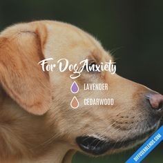 For Dog Anxiety - Essential Oil Diffuser Blend