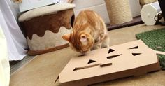 homemade cat toys puzzle toys