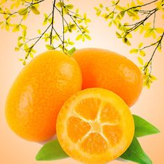 Kumquat Fragrance Oil from Nature's Garden is perfect for homemade soaps, candles, bath and body products, room scents, and cleaning supplies.