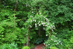 """entrance the woodland garden from Kevin Lee Jacobs blog """"A Garden for the House"""""""