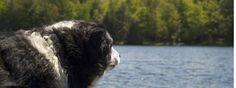 Dog Friendly Hotels Lake District - Linthwaite House Hotel