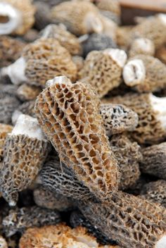 How to dry and freeze Morel Mushrooms