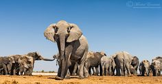 Among the Herd. Up close and personal with a breeding herd of African Elephants in Etosha, Namibia.  #Travel-ParadiseDivineAfrica