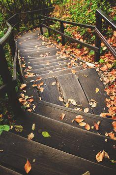 Autumn | Onur Köksal (via wonderous-world)