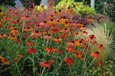 Coneflower Tiki Torch, Echinacea Tiki Torch, Orange Coneflower, Orange Echinacea