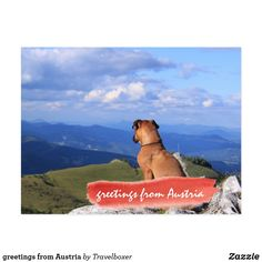 greetings from Austria Postkarte Austria, Dogs, Animals, Map Invitation, Visit Cards, Postcards, Pictures, Animais, Animales