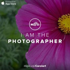 miPic is a social marketplace for artists & photographers to print, share & sell their pictures as beautiful art, fashion and lifestyle products Purple Flowers, Fashion Art, Cool Art, App, Gallery, Awesome, Check, Pictures, Beautiful