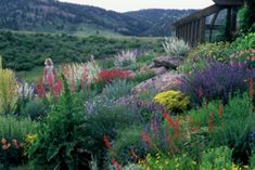 62  Top Xeriscape Landscaping Colorado Inspirations You Need To Know - Page 54 of 64