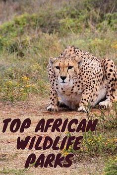 Best African wildlife parks for ultimate game watching