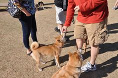 Image source: @TarotheShibaInu via Flickr       5 things not to do at the dog park.