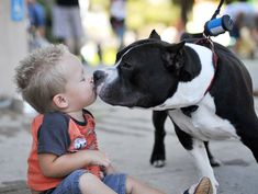 StubbyDog: About - Humane organizations are doing critical work rescuing and rehabilitating pit bulls
