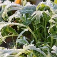 Mustard Greens for Fall Mustard Greens, Backyard Farming, Urban Farming, Fall Food, Plants, Recipe, Recipes, Vegetable Gardening, Plant